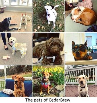 CedarBrew_dogs_caption